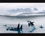 MISTY ORCA WATERS