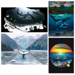 FINE ART MINI PRINT SETS - WYMP-SET07