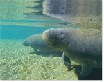 MANATEE WATERS