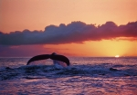 WHALE SUNSET (8X10 MATTED)