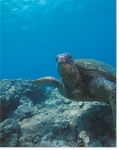 SEA TURTLE ENCOUNTER