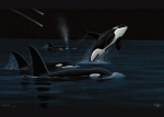 ORCAS SHOOTING STARS