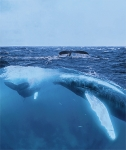 HUMPBACK TWO WORLD VIEW