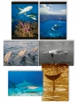 NATURE PHOTOGRAPHY NOTE CARDS SETS - WYNC-SET0814