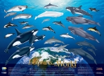 Poster, Dolphins of the World (19 X 26)