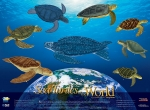 Poster, Sea Turtles of the World (19 X 26)